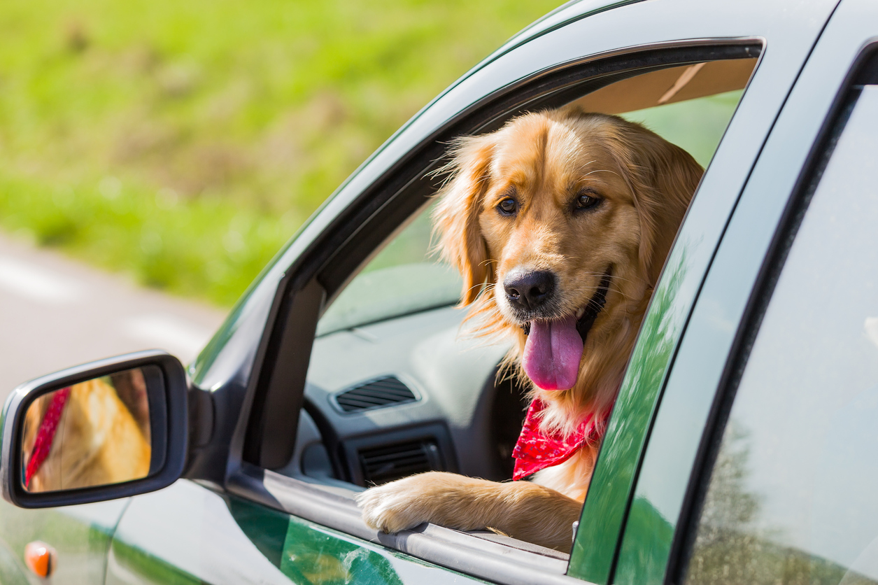 Pet Safety Vehicle Guidelines for Summer